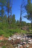 avskrädegropträ royaltyfri bild