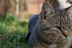 Avslappnande katt Fotografering för Bildbyråer