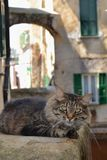 Avslappnande katt i den historiska mitten av San Remo arkivfoton