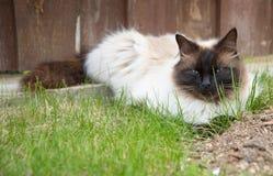 Avslappnande katt i ett gräs Royaltyfri Foto