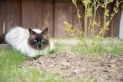 Avslappnande katt i ett gräs Arkivfoto