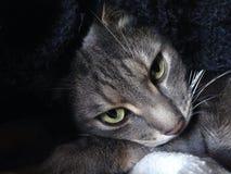 Avslappnande katt på min säng Royaltyfria Bilder