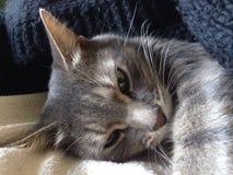 Avslappnande katt på min säng Arkivfoto