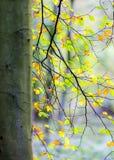 Avslappnande och fridsam plats i skogen med avkänning för jämvikt och lugn arkivfoto