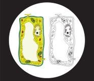 avsnitt för cellkorsväxt stock illustrationer
