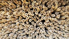 Avsnittdel av bambu arkivfoton