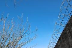 Avstånd mellan taggtrådstaketet och träd på bakgrund för blå himmel royaltyfria foton