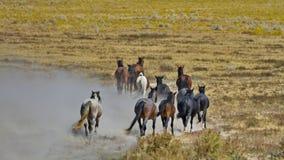 Avtågande flock av vildhästar Fotografering för Bildbyråer