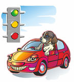 Avtodog. Home animal puppy on red car stopped beside traffic light and peers out booth Royalty Free Stock Photos