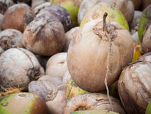 Avvantaggi l'AIDS della noce di cocco delle FO negli sforzi di perdita di peso, Immagine-perfetti fotografia stock