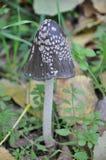 Avvelenamento del fungo fotografie stock