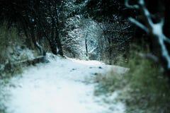 Avventura del paese delle meraviglie di inverno del percorso della neve Immagini Stock Libere da Diritti