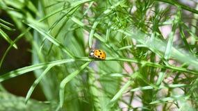 Avventura di Ladybird Fotografie Stock Libere da Diritti