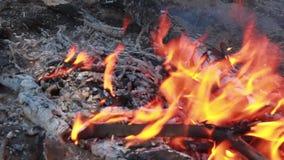 Avventura di rilassamento del fuoco di accampamento stock footage