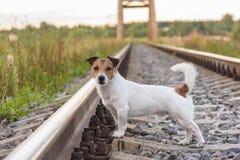Avventura di viaggio di estate su una ferrovia con un cane sveglio fotografia stock libera da diritti