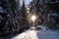 Avventure di inverno Foresta Carpathians di Snowy l'ucraina fotografia stock libera da diritti