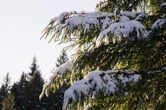 Avventure di inverno Foresta Carpathians di Snowy l'ucraina immagine stock