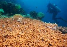 Avventure subacquee fotografia stock