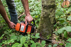 Avverka för träd Fotografering för Bildbyråer