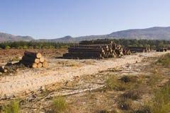 avverka skogtreen Arkivbild