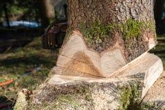 Avverka trädet arkivfoton