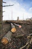 Avverkad skog i Skottland Royaltyfri Fotografi