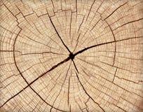 Avverkad stubbe av treen Royaltyfria Bilder