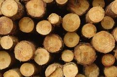 Avverkade träd. Arkivbild
