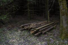 Avverkade träd lagras i en mörk skog arkivbilder