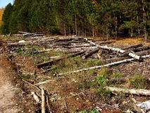 Avverkade trädstammar som staplas i en hög Royaltyfri Foto