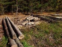 Avverkade trädstammar som staplas i en hög Arkivfoton