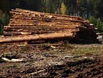Avverkade trädstammar som staplas i en hög Fotografering för Bildbyråer