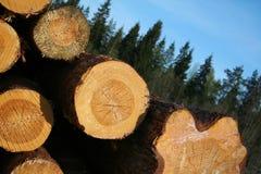 avverkade trees Fotografering för Bildbyråer