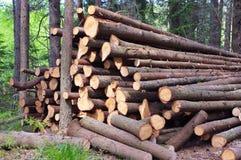 Avverkade treestammar Arkivfoto
