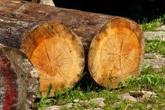 Avverkade treestammar Arkivfoton