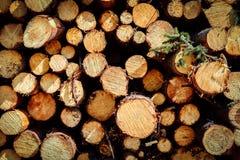 avverkat sörja trees Fotografering för Bildbyråer