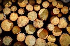 avverkat sörja trees Royaltyfri Foto