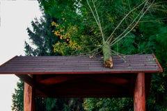 Avverkat träd på taket Royaltyfri Fotografi