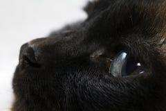 Avvisti il gatto Fotografie Stock Libere da Diritti