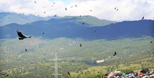 Avvoltoi allo scarico Fotografia Stock