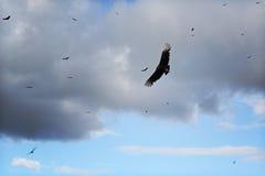 Avvoltoi di turbine Immagine Stock