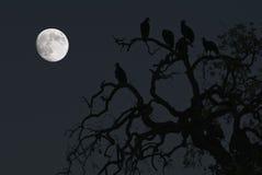 Avvoltoi e una luna piena Fotografie Stock