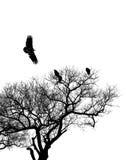 Avvoltoi incappucciati Fotografie Stock Libere da Diritti