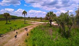 Avvoltoi nel parco nazionale dei terreni paludosi Immagini Stock