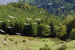 Avvoltoi nella montagna Immagini Stock Libere da Diritti