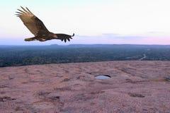 Avvoltoio in ascesa Immagini Stock Libere da Diritti