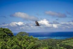 Avvoltoio che sorvola giungla immagini stock