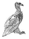 Avvoltoio Cinereous Immagine Stock Libera da Diritti