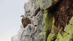 Avvoltoio d'ondeggiamento sopra Salto del Gitano, Spagna archivi video