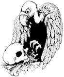 Avvoltoio del cranio Fotografia Stock Libera da Diritti